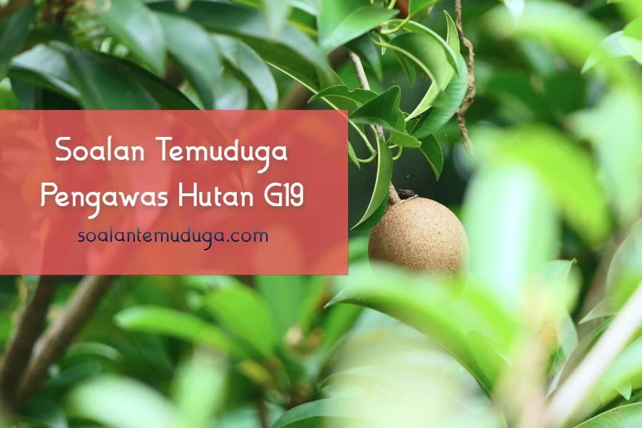 Soalan Temuduga Pengawas Hutan G19